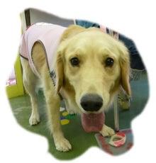 犬っちのブログ-koharu1