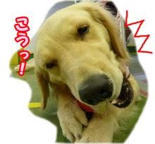 犬っちのブログ-koharu5