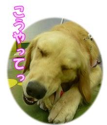 犬っちのブログ-koharu3