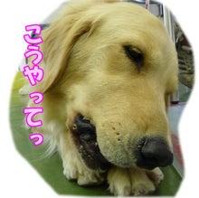 犬っちのブログ-koharu4