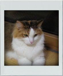 8.9.10…シビル&dodici&Treize-2010072920090000.jpg