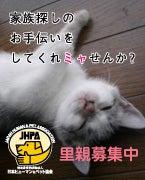 猫の飼い主さん募集掲示板