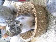 トムとあんずのニャンコ日記-Image054.jpg