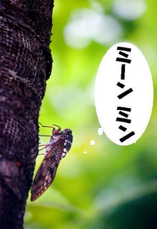 $beauche☆ブログ