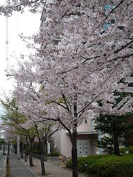 $わつぃの独りごと。-マンションの桜。