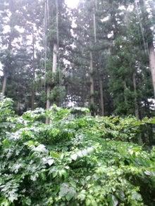 雑貨屋 子子子(こねこ)の日々-野遊び 雨.jpg