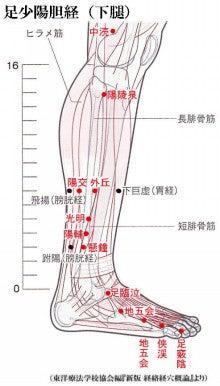 春月の『ちょこっと健康術』万能ツボ☆特効ツボの記事(61件)養生保健のツボ 足三里