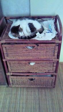 臣の野良猫仕事日記-201008110830000.jpg