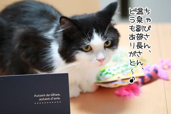 ワタコとショウゾウ-プレゼント4