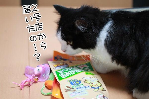 ワタコとショウゾウ-プレゼント3