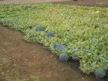 ウッシーの四季折々通信-農業マン物語