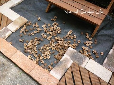 + + Natural Garden Life + +