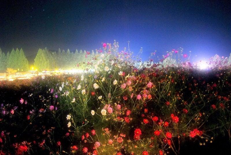 白鳥座-高原の夜風