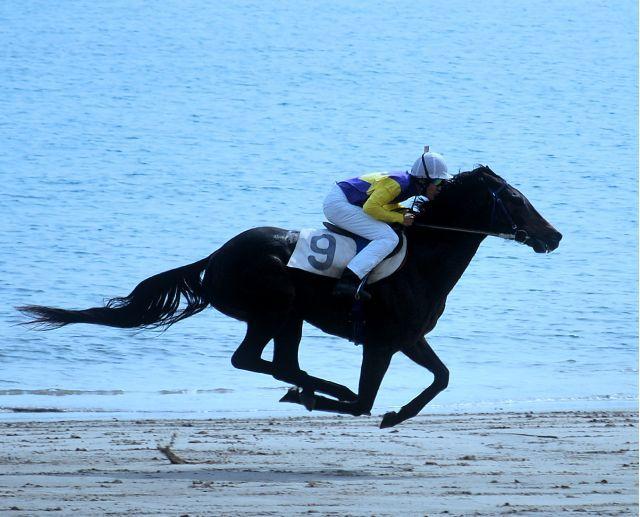 白鳥座-浜競馬