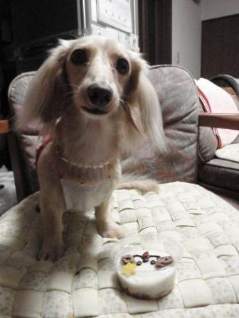 Miniaturedachshund -Cookie- &  I