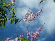 小笠原エコツアー 父島エコツアー         小笠原の旅情報と小笠原の自然を紹介します-オオバナサル