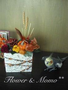 $オカメインコのももちゃんと花教室と旅日記