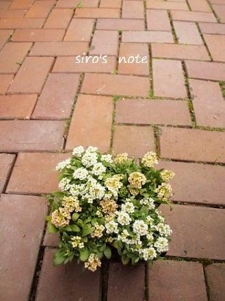 siro's note-おはな