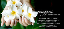 $自由が丘隠れ家プライベートネイルサロン(バイオジェル・低価格設定) Hand&Nail Frangipani フランジパーニ