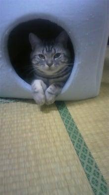不動産とハードロックと猫