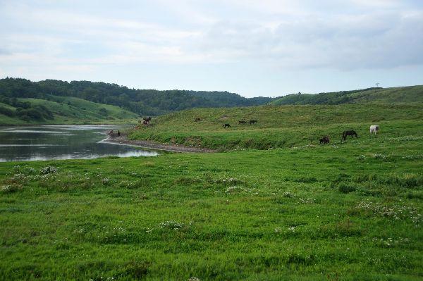北海道の野生動植物写真-牧場