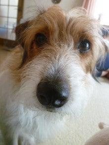 ほのぼの日記♪ ~愛犬と暮らす~