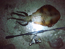 ソルトパラダイスの釣行記 シーバス エギンク ロックフィッシュ アジングまでなんでもやっちゃうよスペシャル-CA3F02240002.jpg