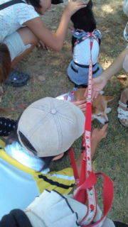 豆柴ひなひまのブログ-20100829094253.jpg