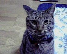 猫さん達の休憩所-2010082320220001.jpg