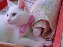 猫さん達の休憩所