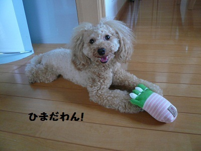 ♪poppo・・・happy dairy♪