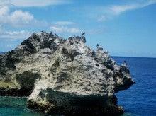 小笠原エコツアー 父島エコツアー         小笠原の旅情報と小笠原の自然を紹介します-カツオドリ