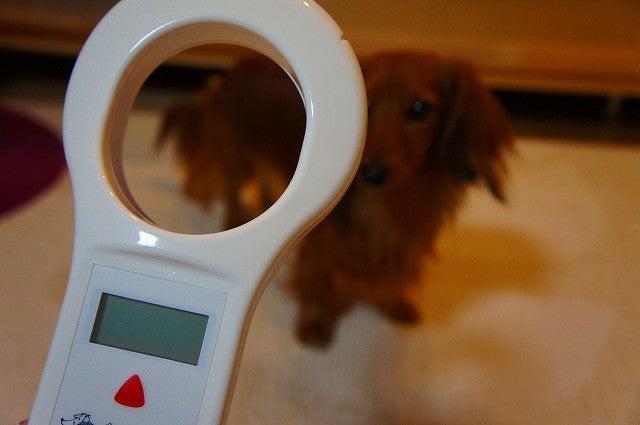 旅犬Lanileaのほほん風船記-マイクロチップリーダー