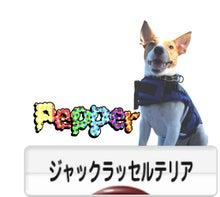 ジャックラッセルテリア Red Hot Yuge Pepper-ブログ村
