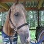 ●乗馬クラブリーフ