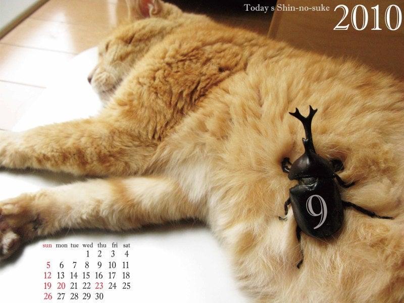 今日の新之介 ~癒し系オヤジ猫~-10年9月