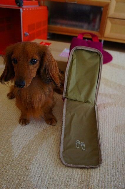旅犬Lanileaのほほん風船記-Lani&Lea旅仕度