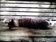 ★コピーライターが思わず ! となったコピー。-sleepcat