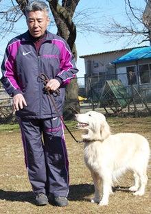 犬のしつけ「ほえる」犬も数分でいい子に!カリスマしつけ士の自宅でできるしつけDVD!-1