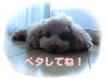 ☆大好き☆  ありす♪