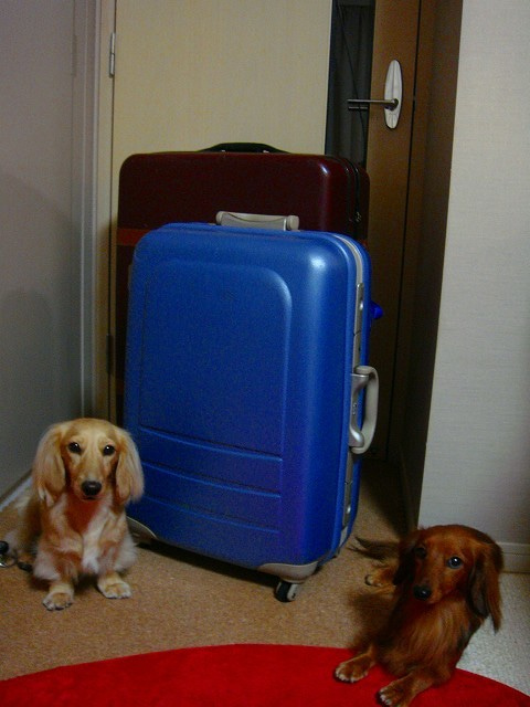 旅犬Lanileaのほほん風船記-荷物