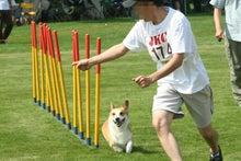 北海道の競技会で走るkoro隊長