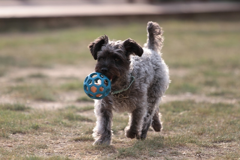 Ken's style dog photo-詩