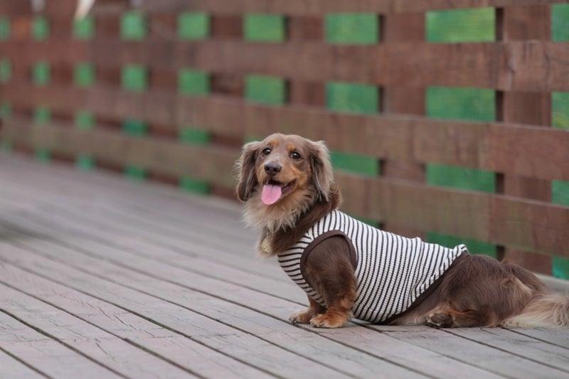 Ken's style dog photo-アルフレッド