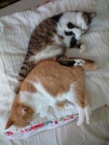 ずれずれブログ…湘南で猫と暮らせば…-100912_1412~0001.jpg