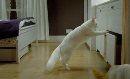 $∞最前線 通信-ikea cat3