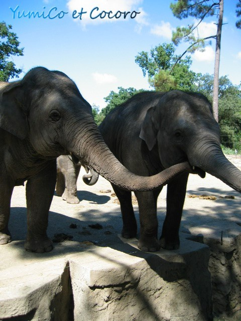 - Le blog de Paris- フランス生活,旅行記,結婚-elephant