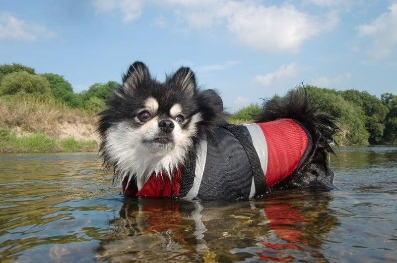 Ken's style dog photo-ルパン
