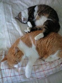 ずれずれブログ…湘南で猫と暮らせば…-100914_1536~0001.jpg