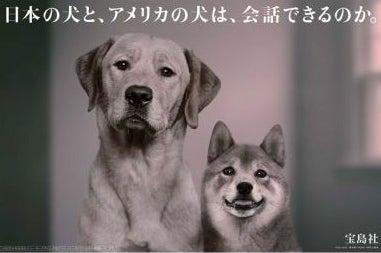 $∞最前線 通信-宝島者 日本の犬とアメリカの犬 @japan